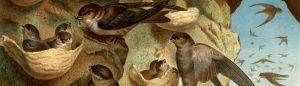 екстракт от лястовиче гнездо