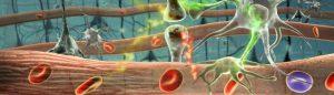 паразити в човешкото тяло