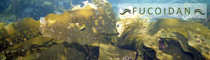 Фукоидан – удивителна морска сила!