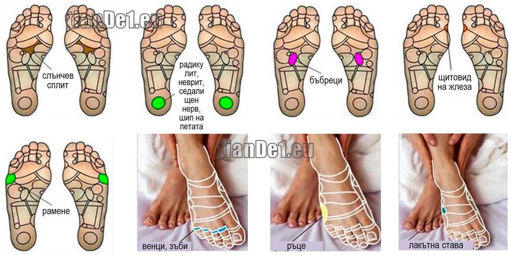 Рефлексните зони на стъпалата