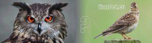 Чучулиги и сови хранене