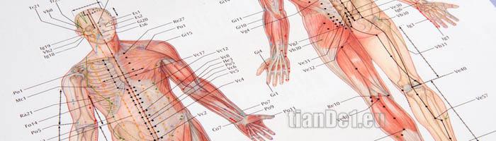6 общи лечебни акупунктурни точки